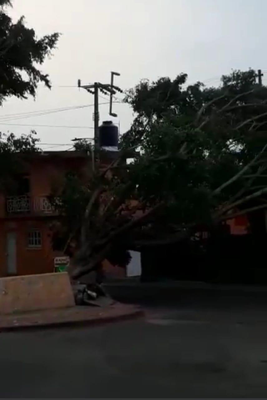 Por fuertes vientos, caen 12 árboles en diversos municipios de Morelos