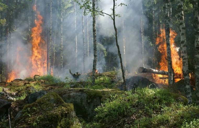 Incendia cerro de Tepoztlán cuando grababa un video para TikTok