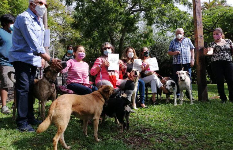 Vecinos de col. Rancho Cortes buscan hogar a más de 30 perros abandonados